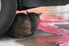 流れる車の色を見つめて、梅雨入りのトラ次郎