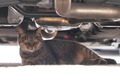 車の下は安らぎの場所