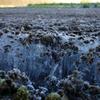 寒い朝 畑の霜柱