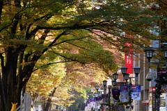 秋のケヤキ並木