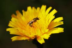 花粉に溺れる