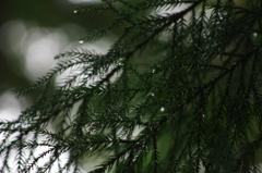 雨上がり。
