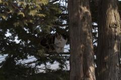 猫の木登り