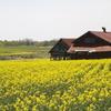 田舎の風景 17