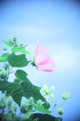*ピンクのお花*