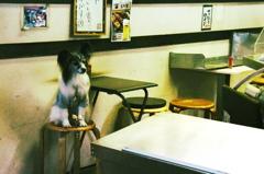 焼き鳥屋さんの看板犬