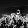 大阪城と蘇鉄