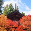高野山の紅葉 10