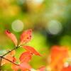 大仙公園日本庭園 12