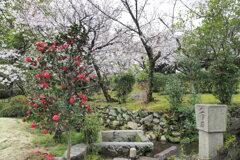 極楽浄土の庭 3