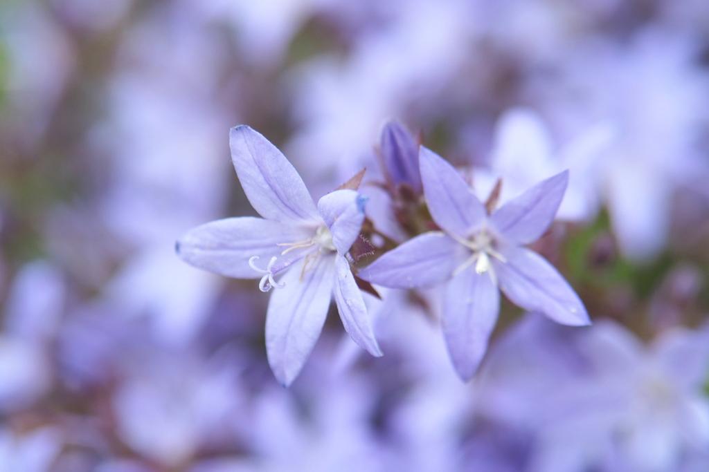 近所の花 3