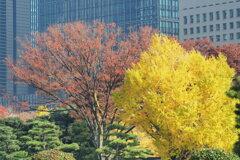 皇居前広場 7