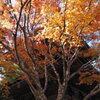 高野山の紅葉 12