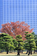 皇居前広場 8