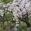 極楽浄土の庭 4