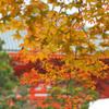 高野山の紅葉 15