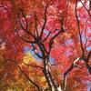 高野山の紅葉 9
