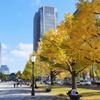 東京駅駅前の銀杏並木 3