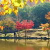 鷺池の紅葉