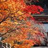 高野山英霊殿の紅葉