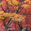 高野山の紅葉 4