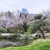 極楽浄土の庭 5