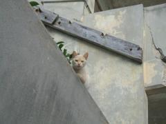 こちらを監視するねこ