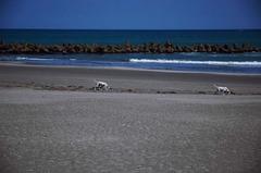 海とダルメシアン