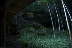 抹茶と観る庭園