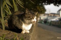 ハナタレ哀愁猫