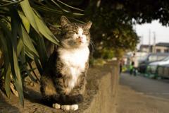 哀愁猫引き続きハナタレ記録に挑戦