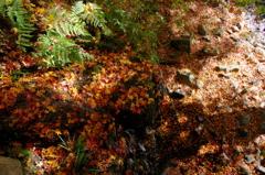 幾千枚の落ち葉