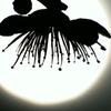 太陽に浮かぶ梅の影
