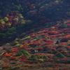山の斜面の紅葉