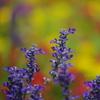 夏の紫色の花6
