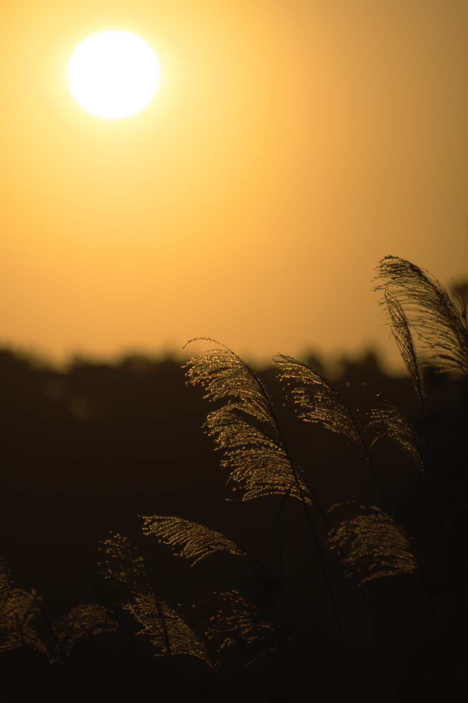 野原の日の出