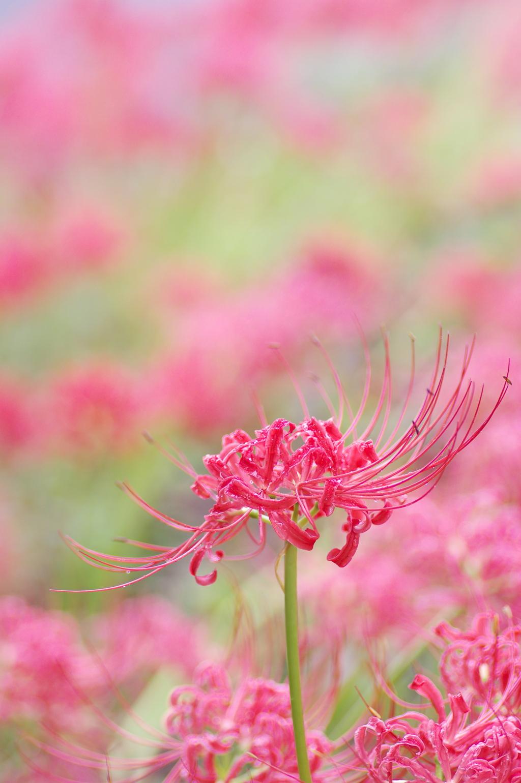 目立った花