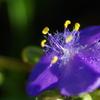 朝日を浴びる紫の花