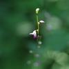 渓谷の花2