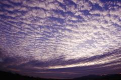 朝日を浴びる鱗雲