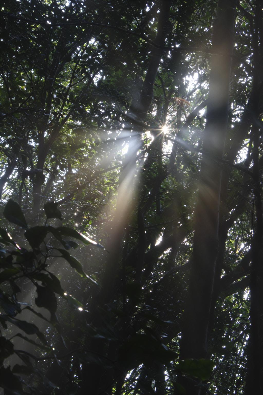 日差しの輝き