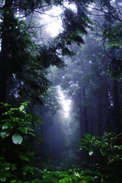 霧の森の奥