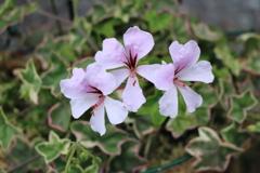 庭に咲く花 Vol.105