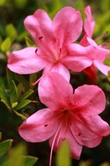 庭に咲く花 Vol.64