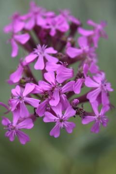 庭に咲く花 Vol.82
