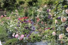 大安禅寺の薔薇園