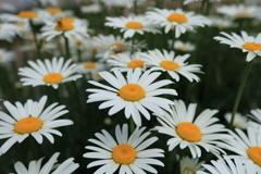 庭に咲く花 Vol.65