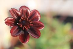 庭に咲く花 VOL.144