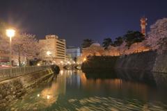 福井城址夜桜2