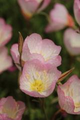 庭に咲く花 Vol.66